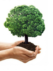 Cabo Verde quer plantar oito milhões de árvores nos próximos 15 anos