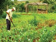 Japão substitui ajuda alimentar por financiamento de projetos agrícolas em Cabo Verde